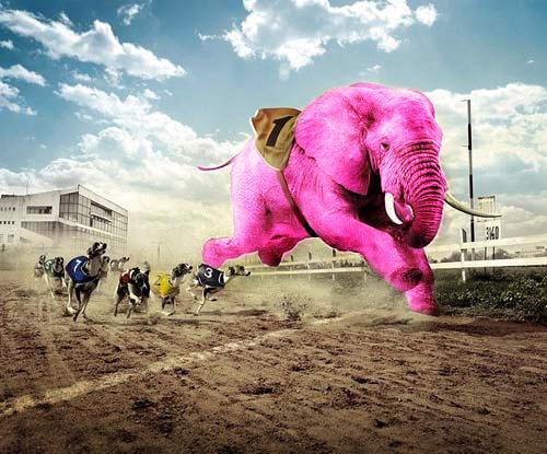 elephant-race